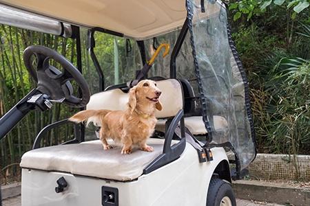 golf cart repair leesburg